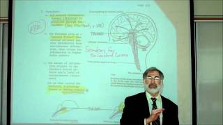 REVIEW OF THE FUNCTIONAL AREAS OF THE BRAIN; Part 1 by Professor Fink