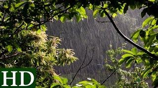 Pluie - Bruit de la Pluie et Nature - Relaxation, Dormir