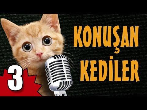 Xxx Mp4 Konuşan Kediler 3 En Komik Kedi Videoları 3gp Sex