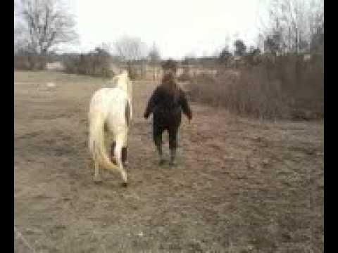 Xxx Mp4 Horse Dancing To Lady Gaga 3gp 3gp Sex
