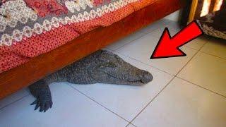 أغرب 5 أشياء عُثر عليها تحت السرير في العالم..!!