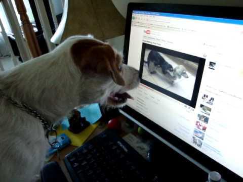 Dog watches porn