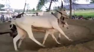 Lumber Khera- Halt Di Dhor New Video 2016 - Lumber Khera