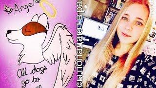 #RipAngel/История собаки Ангел/