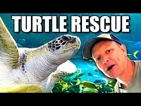 Everything about Sea Turtles Smarter Every Day 239