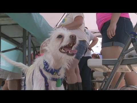 Santa Fe Police warn against bringing dogs to city events
