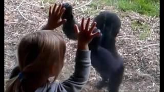 Baby Gorilla Shares TenderBaby Gorilla