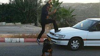 عشاق كلاب الروت وايلر  الجميل مع جمال العمواسي