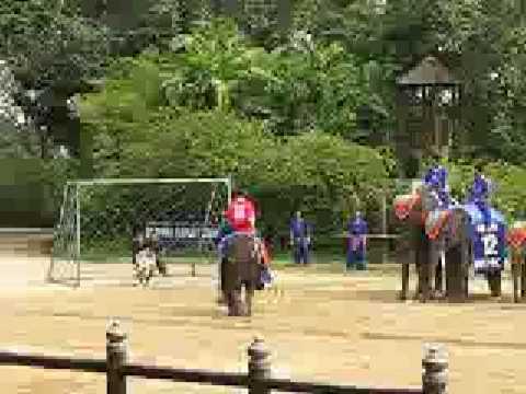 การแสดงของช้าง 3 3