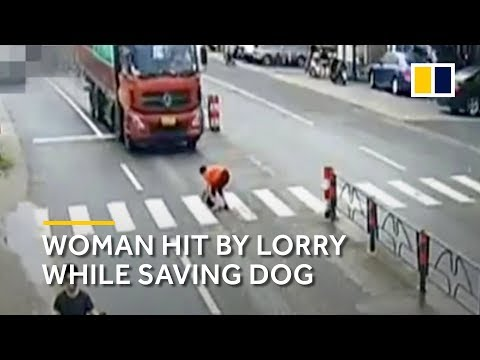 Xxx Mp4 Chinese Woman Trying To Save Dog Gets Hit By Lorry 3gp Sex