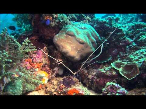 Arrecifes Asombrosos