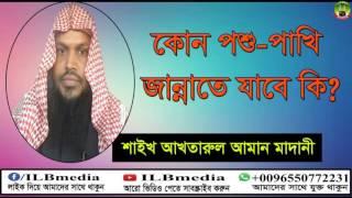 Kono Poshu Pakhi Ki Jannate Jabe?  Sheikh Akhtarul Aman Madani