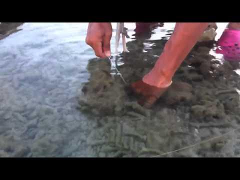 ปลาหมึกสดๆจากทะเลภูเก็ตหาไม่ยาก