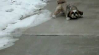 Chase the dog sliding down Driveway