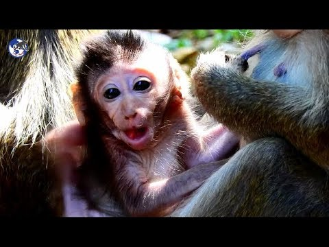 Xxx Mp4 Baby Jessie Visit Sweetie Sasha Let Her Baby Near Dolly Without Her World Monkey 3gp Sex
