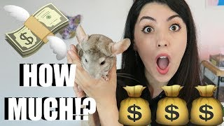 PET CHINCHILLAS | HOW MUCH DO THEY COST? | PETS