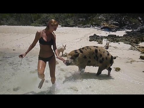 Wild Pig Tries To Bite Woman's Butt