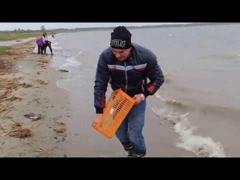ловить раков красноярск