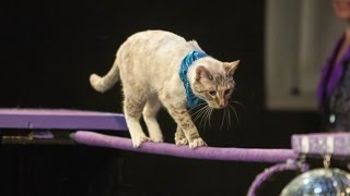 Love Cats and Need a Job? Join the Cat Circus! | The Scene