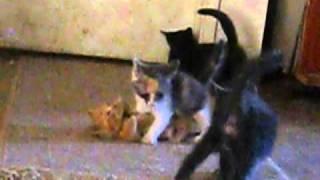 1 gang bang on a tiny pussy.AVI