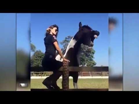 Cavalo Tarado