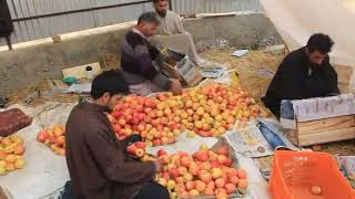 The art of Packing of apples has its own price.