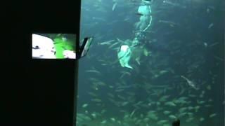 20100714124923.mpg Die Mondfische werden gefüttert