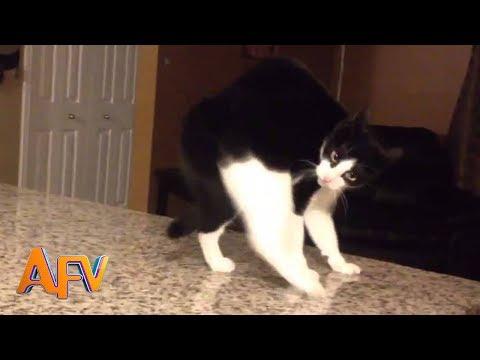 101 SUPER Weird Cats AFV Funniest Cat Videos 2018