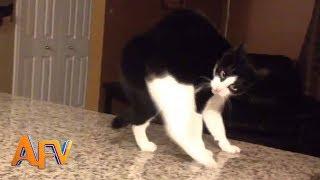 101 SUPER Weird Cats | AFV Funniest Cat Videos 2018