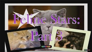 How to make your Cat a Star! pt 3