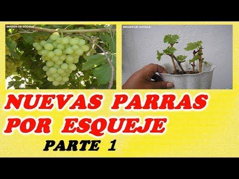 Como reproducir parras o cepas de uva por estaca 1ª Parte Destacados Esquejes