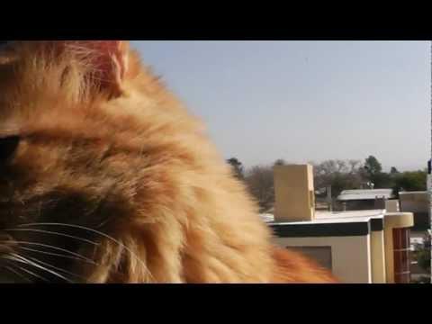 Garfield Negra y Gris mis gatos