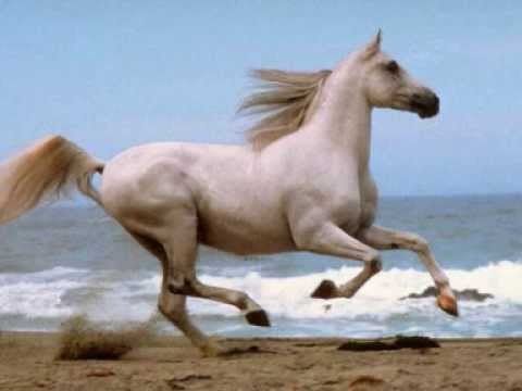 Xxx Mp4 Amazing Horses Xxx 3gp Sex