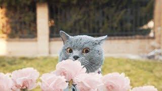 Aarons Animals - The Girl Next Door (Valentine's Day)
