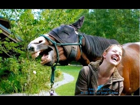 Smeh do suza Smešne životinje 3 Funny animals 3