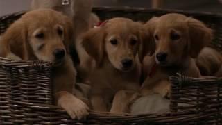 Nagypályás kiskutyák (2006) Air Buddies | Trailer HD