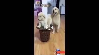 Best Dog Responding to the Human Teasing of Dog Soup