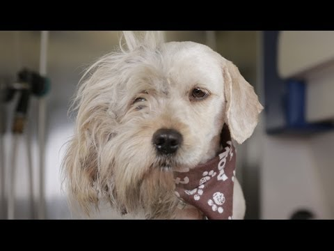 Homeless Dog Gets Makeover That Saves His Life Charlie