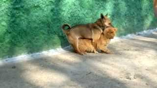 sexi dog ( oficial video HD)