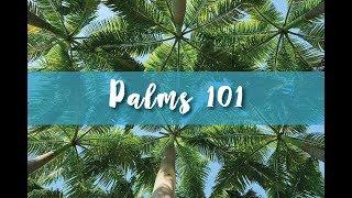 Palms 101 Part 1.