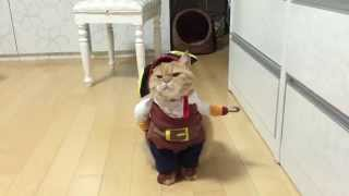 Pirate cat! Pirates of the Caribbean costume  (name is Zeon)