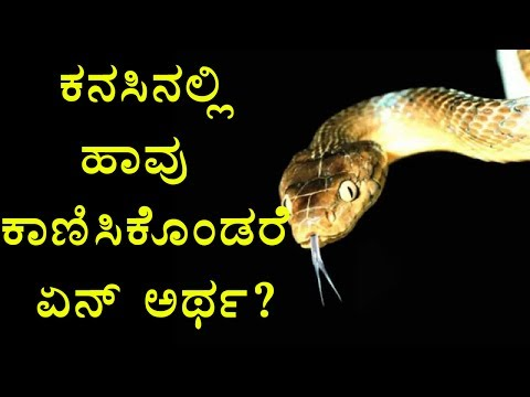 Xxx Mp4 Snake Dreams What Happens When You Get Snakes In Your Dream Oneindia Kannada 3gp Sex