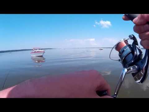 как ловить судака на море