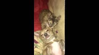 Tisha & Penny Kisses