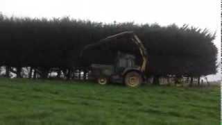 Hedge & Shelterbelt Trimming