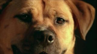 Pedigree Dog Commercial - Shelter Dog