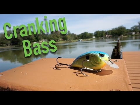 Cranking Wood For Summer Bass -- Quick Tips #3