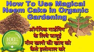 Organic Fertilizer:Magical Neem Cake Cheap For All Gardening