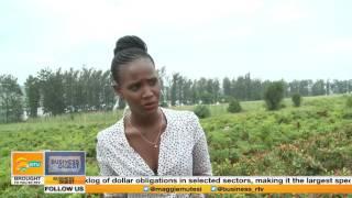 Business Digest focus on a  Chilli Farm in Rwanda