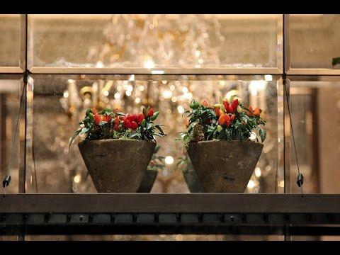 Restaurant Flowers: Spring Flower Display for London Brasserie Chavot